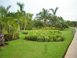 Jardines tropicales - Plantas tropicales para jardin ...