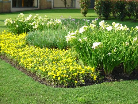 Macizos canteros for Arbustos de jardin fotos