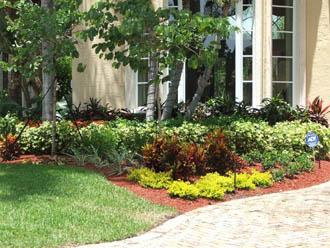 Jardin tropical for Jardin tropical plantas